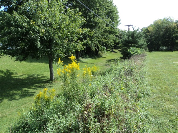 Ditch running parallel to northern boundary of Greenwood Cemetery. Photo by author.